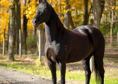Belle Noire